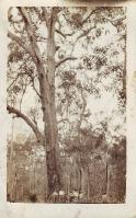 Beerburrum c 1916