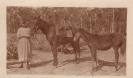 Nellie Sykes with horses
