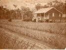 Ernest Sykes farm Beerburrum