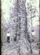 Miok Lynch and unidentified settler Beerburrum 1927