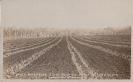 State Farm Beerburrum c 1920