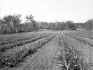 Training farm, Beerburrum, October 1918